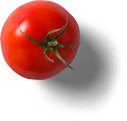 Tomate auf weissem Hintergrund